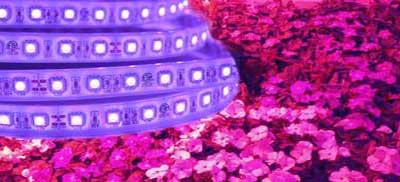 led-grow-light