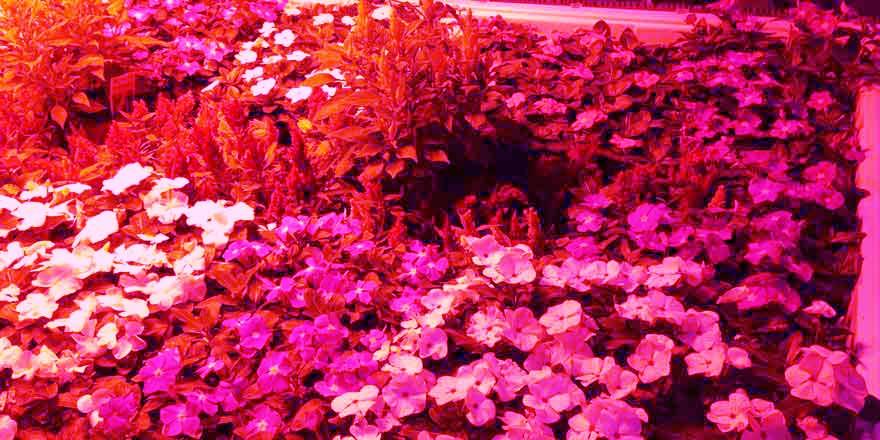 Led Grow Strip Plant Light Led World Lighting
