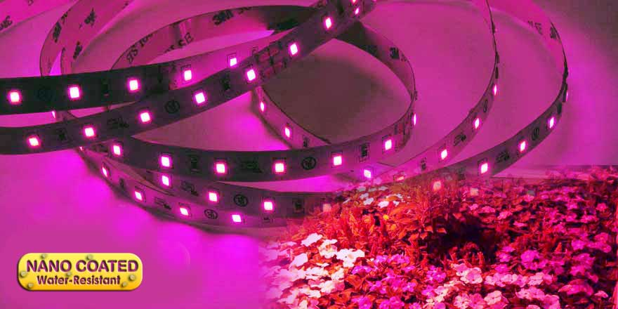 Water Resistant LED Grow Strip Light HH-S2835P-60-24-5M